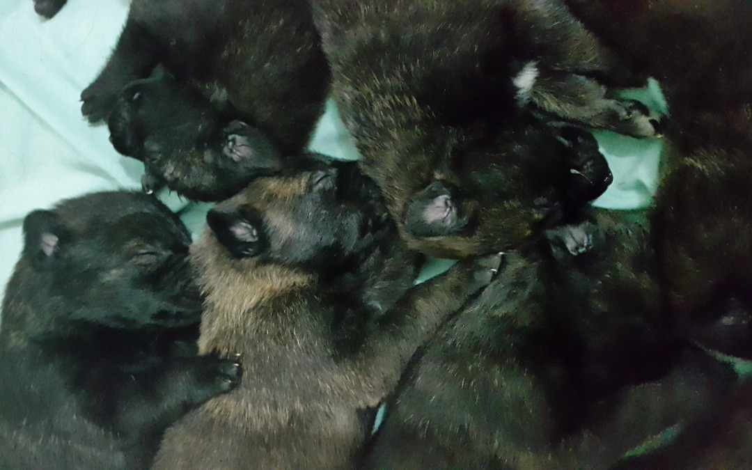 Perritos que duermen al fin – Puppies sleeping at last